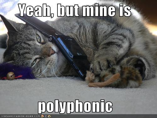 ICanHazCatPolyphonic